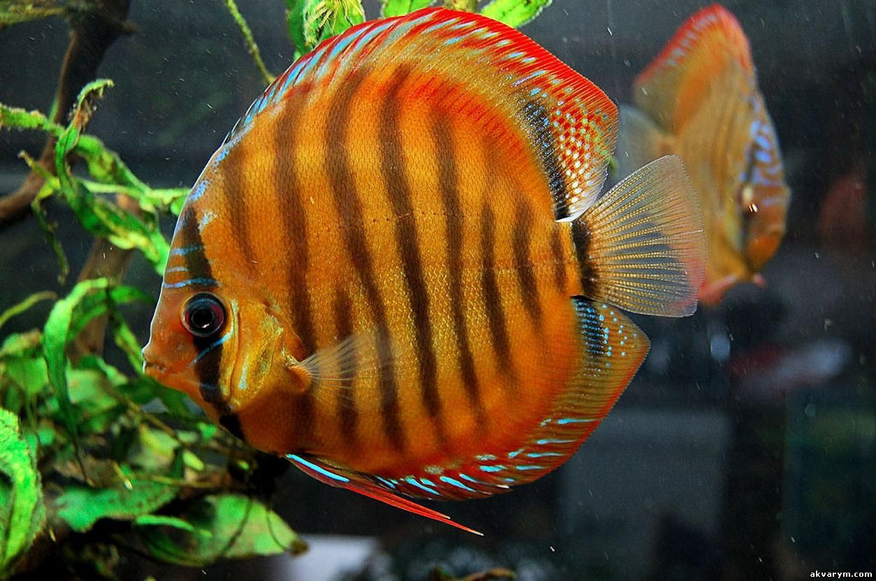 рыбки аквариумные рыбки фото